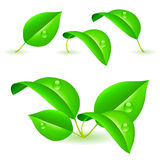 Green leaves. Stock Photos