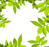 Green leaves. Frame can use for background Royalty Free Stock Photography