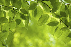 Green leaves, Stock Images