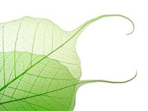 Free Green Leaves Royalty Free Stock Photos - 2298718