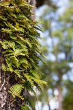 Green leaves. Close up on pinnate leaves of tree Royalty Free Stock Images