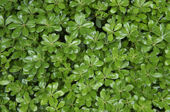 Green leaves. Ideal for background use Stock Image