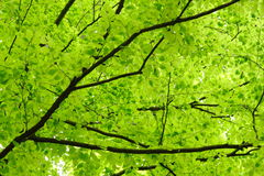 Free Green Leaves Stock Photography - 24901042