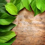 Green leaves. On wooden background Stock Image