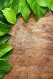 Green leaves. On wooden background Royalty Free Stock Image
