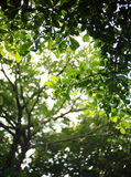 green leaves Fotografering för Bildbyråer