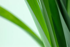 Green leaves. Detail shot of green leaves royalty free stock photos