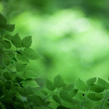 green leaves royaltyfria foton