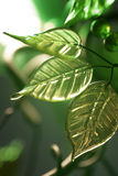 Green leaves. Green glass leaves with selective focus and narrow depth of field for effect royalty free stock photography