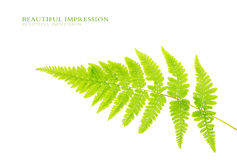 Green leaves. Against white background Stock Photography