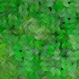 Green leaves. Patten Stock Photos