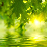 Green leaves. And sun reflecting in the water Royalty Free Stock Image