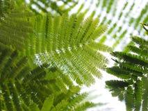 green leaves royaltyfri bild
