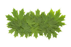 green leaves Arkivfoton