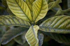 green leaves royaltyfri foto