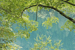 Green leaves above blue water. And inverted image of trees in water Stock Image