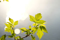Green leaves above water Stock Images