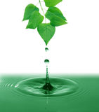 Green Leaves Above Water Stock Photos