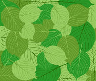 Green leaves abstract background Stock Photo