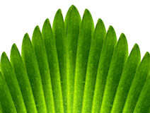 Green leaves abstract. Background gardens stock photos