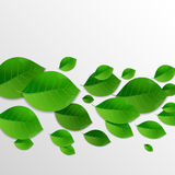 Green leaves abstract background. Vector Royalty Free Stock Photo