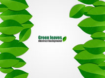 Green leaves abstract background.Vector Illustration Royalty Free Stock Photography