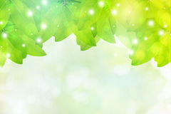 Green leaves with abstract blur bokeh spring or summer background Royalty Free Stock Photo