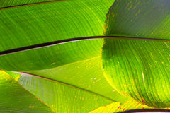 Green Leaves Abstract Stock Image