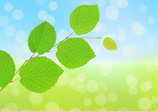 Green leaves on abstract natural background Royalty Free Stock Photos
