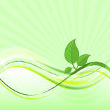 Green leaves on abstract  wave background. Natural composition. Stock Photos