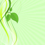 Green leaves on abstract  wave background. Natural composition. Royalty Free Stock Photography