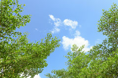 green leaves against blue sky Royalty Free Stock Images