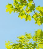 Green leaves against blue sky royalty free stock photos