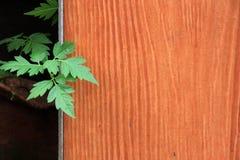 Green leaves against orange fence. Stock Photo