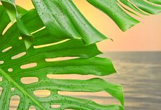 Green leaves against sea sunset Stock Photo