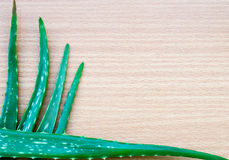 Green leaves of aloe plant Royalty Free Stock Photos