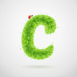 Green leaves alphabet with ladybird. Ecology summer. Letter C Stock Image