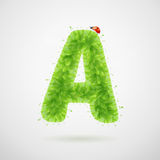Green leaves alphabet with ladybird. Ecology summer. Letter A Stock Image