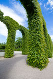Green leaves arches Stock Photography