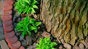 Green leaves around the tree stock footage