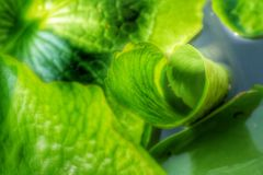 Green leaves. Art of green leaves Stock Photography