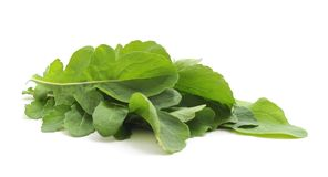 Green leaves of arugula. Green leaves of arugula on a white background royalty free stock image