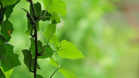 Green Leaves as Abstract Natural Background stock video