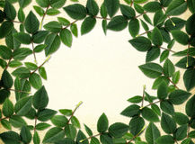 Green leaves as a frame Stock Photos
