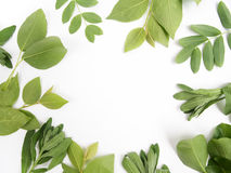 Green leaves as a frame on white paper background. Flat lay Stock Image