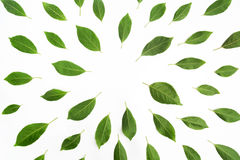 Green leaves as a frame on white paper background. Flat lay Stock Photography