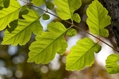 Green leaves on autumn background Stock Photography