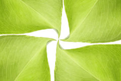 Green leaves background. Green leaves on white background stock image