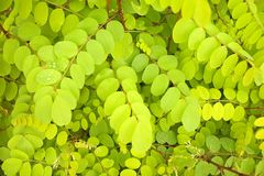 Free Green Leaves Background Stock Image - 1623291