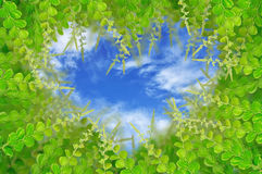 Green leaves for background. & image Royalty Free Stock Photography